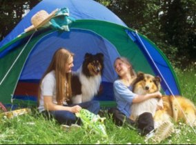 dog to the camping ground