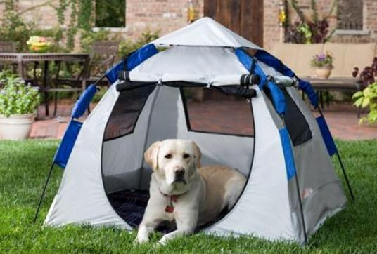 Abo Instent Dog Haus Pet Tent & Taking Pets Along When Camping Just Turned Extremely Practical ...