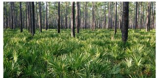 Florida's Cary State Forest