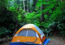 tips for camping in the woods