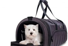 camping gears for dogs