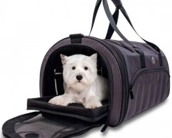 The Must Have Camping Gears for Dogs