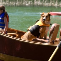 Best Guide to Go for Canoeing with your Dog