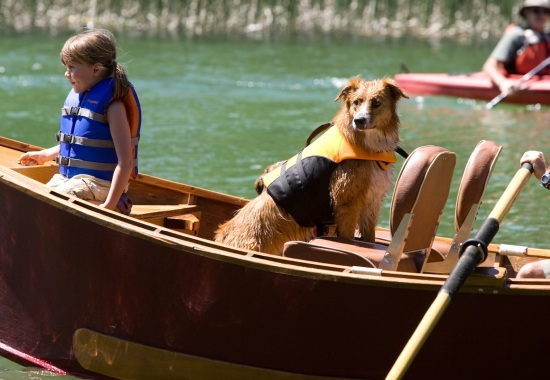 guide to go for canoeing wiyh your dog