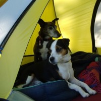 The Top Dog Friendly Campsites in the US