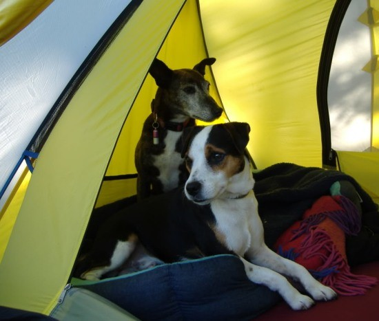 dog friendly campsites in the US