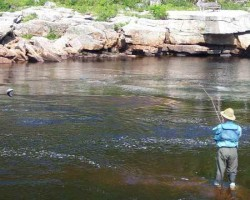 Top 6 Important Tips for Salmon Fishing