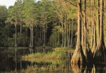 tips for hiking in swamps