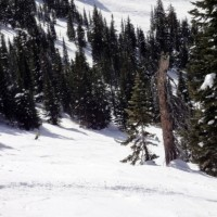 6 Useful Tips to Snowboard Through Trees