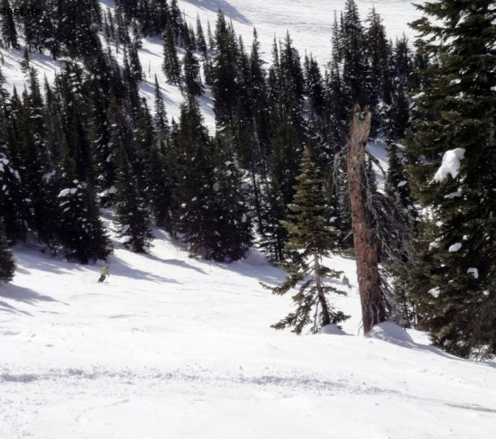 tips to snowboard through trees