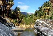 palm springs indian canyons