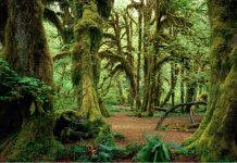 Most haunted forests in the world to camp