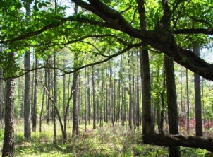 Texas Big Thicket National Preserve