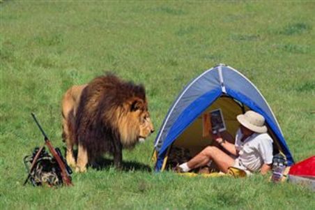 Wildlife and Summer Camping - How to Avoid Mixing the Two ...