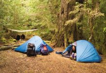 8 Top Tips for Camping in Forest